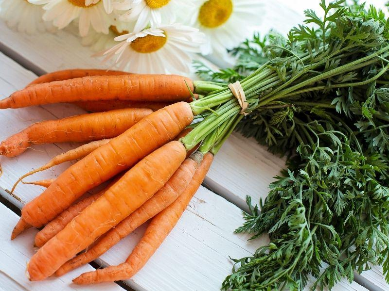 Carrots for Healthy Sperms